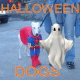 halloweeeendogs.jpg